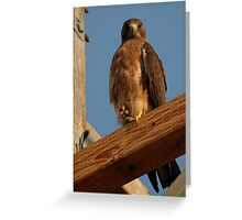 Stare Down Greeting Card