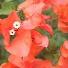 Flowers by Rachel Hoffman