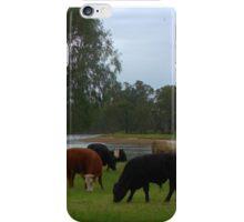Cattle grazing iPhone Case/Skin