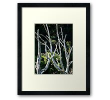 Dead Wood Framed Print