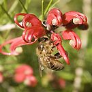 Bee on grevillia by wildrider58