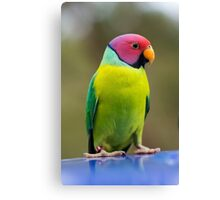SLY the Plum Faced Parrot Canvas Print