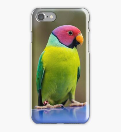SLY the Plum Faced Parrot iPhone Case/Skin