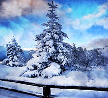 My beautiful fir tree by Philippe Sainte-Laudy