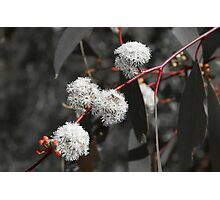 Gumtree Gray Photographic Print
