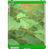 Australian creeper iPad Case/Skin