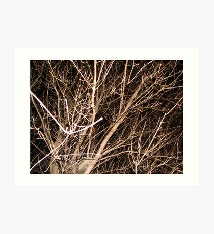 Bare Branches and Black Sky Art Print