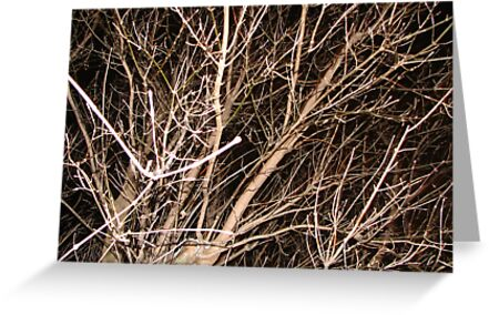 Bare Branches and Black Sky by gypsykatz