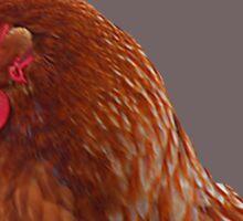 Isa brown hen Sticker