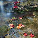 Autumn Waterfall by Annette Blattman