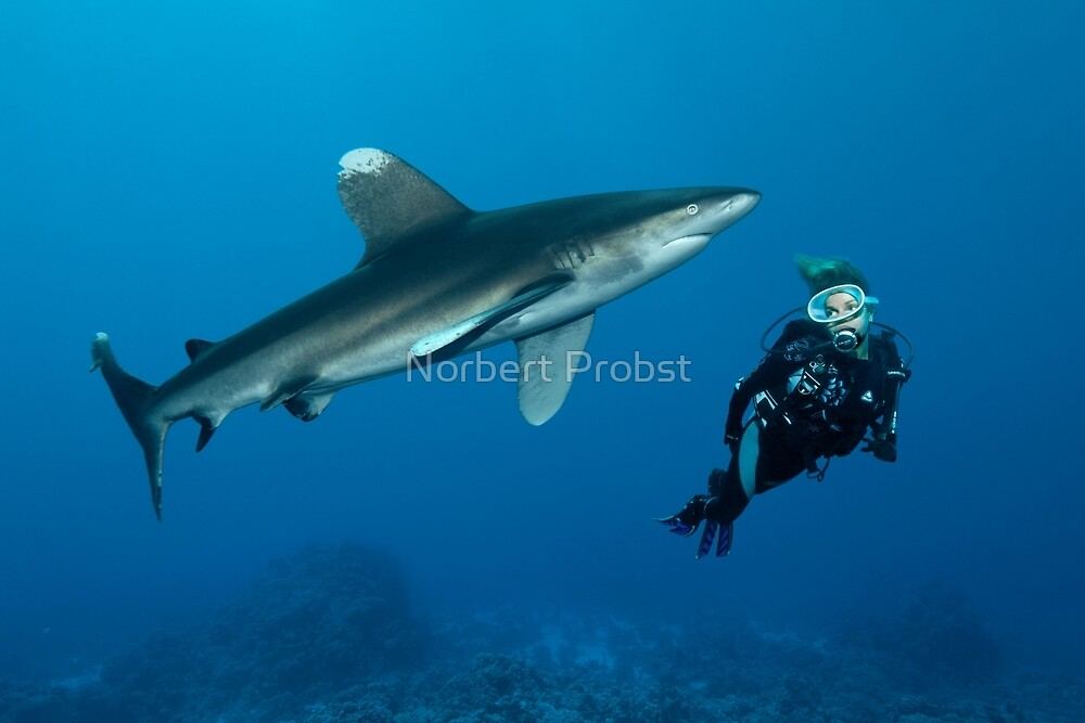 Fearless by Norbert Probst
