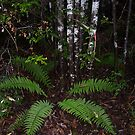 camouflage patterned tree trunks and fern - nice contrast I thought by gaylene