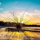 Tumble Sun by tracyleephoto