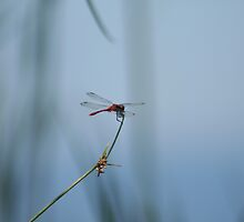 LONELY DRAGONFLY by wildrider58