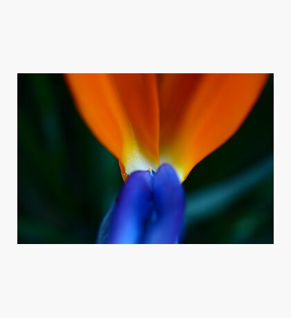 Semi Abstract Flower Photographic Print