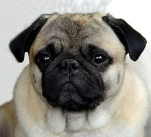 mops little dog by fuxart