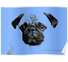 mops puppy pup baby blue Poster
