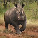 White Rhino by Sharon Bishop