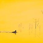 Serene Swim by GeorgeBurr