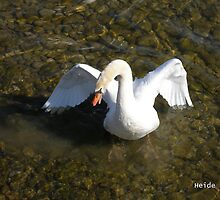 Spitting Swan by Heide  Lorek