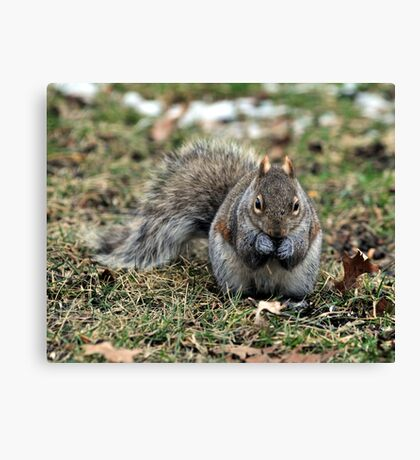 Tough Nut Canvas Print