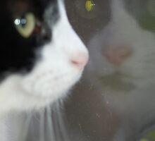 Binky in the Window by ApeArt