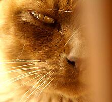 Evil Cat by Kiwikiwi