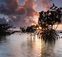 Mangroves at Dawn by Lucy Hollis