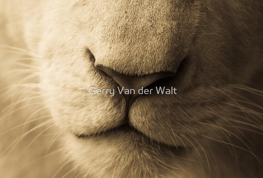 Nose by Gerry Van der Walt
