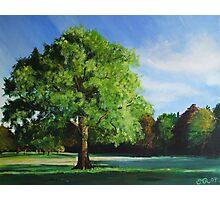 Westonbirt Arboretum Photographic Print
