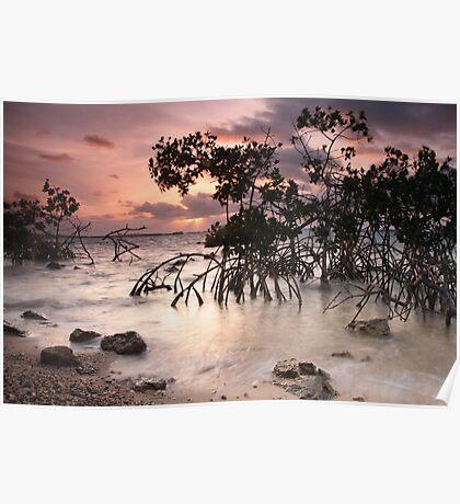 Mangroves at Dawn Poster