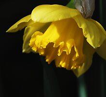Ritratto in giallo by epsylonlyrae