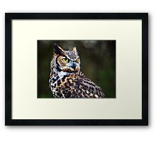 Great Horned Owl Close Up Framed Print