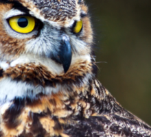 Great Horned Owl Close Up Sticker