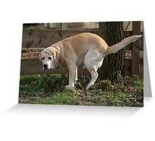 the dog is ... Greeting Card