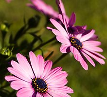 Spring by Chris Marsh