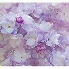 Lilac Flowers by Alyson Fennell