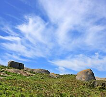 Montague Island 2 by Ross Jardine
