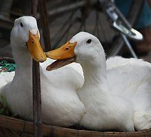 I'm Peking Duck Tonight! by byronbackyard