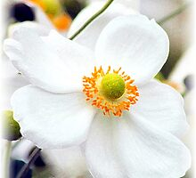 Thursday Flower by Kathleen Struckle