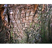 My wonderful tree!! Photographic Print