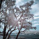 Hardys Bay  by Annette Blattman