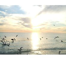 PELICANS AND SEAGULLS Photographic Print