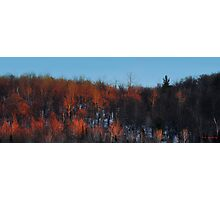 Forest on Fire Photographic Print