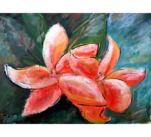 Fragipani Original Acrylic Painting Photographic Print