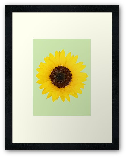 sunflower by ghjura