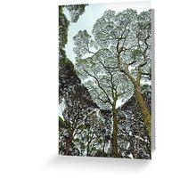 Rainforest Art - Tasmania , Australia Greeting Card