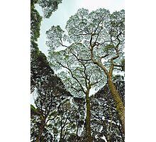 Rainforest Art - Tasmania , Australia Photographic Print