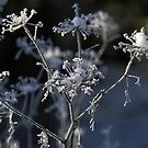 Frosted flowers by EileenLangsley