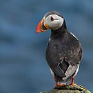 Puffin by M.S. Photography/Art
